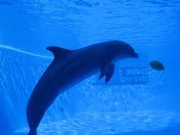 delfini gardaland