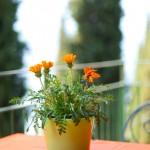 Giardino fiorito da primavera ad autunno