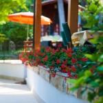 Park with flower garden