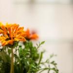 Garten Blumen vom Frühling bis Oktober